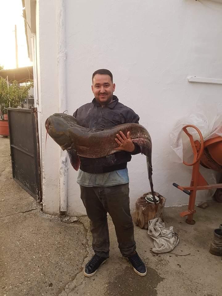 received 1050559758795582 - Αμπελώνας: Ψάρι – γίγας 40 κιλών «έβγαλε» ψαράς στον Πηνειό ποταμό